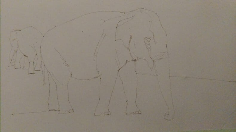 sketch of an elephant made with graphite