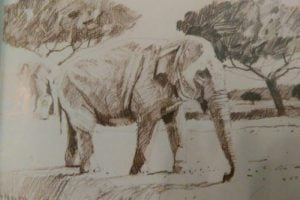 partially completed sketch of an elephant done with graphite