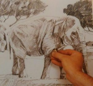 hand with the eraser completing the sketch of an elephant made with graphite