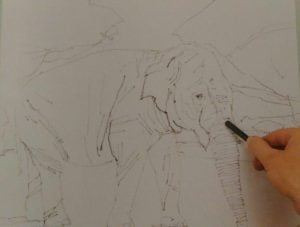 hand sketching an elephant with graphite