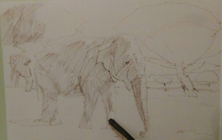 graphite stick adding details to the sketch of an elephant