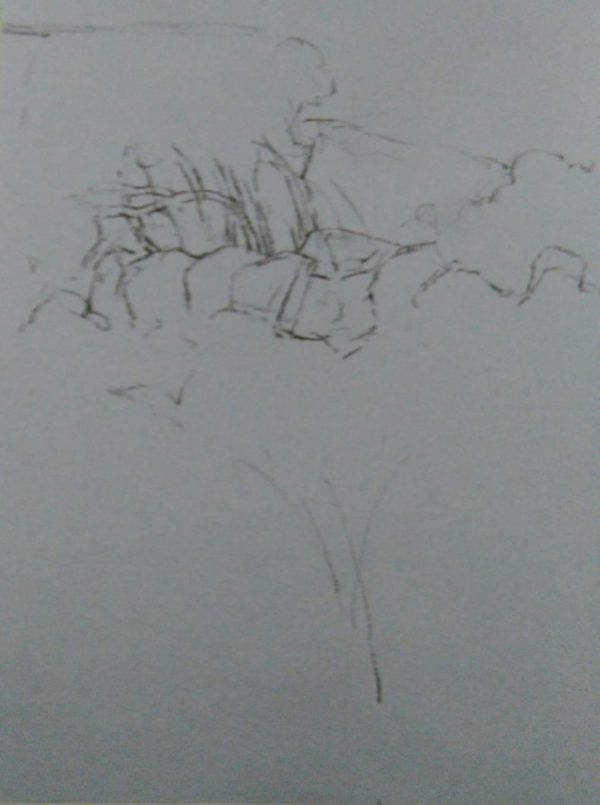 sketch of a fild with wild flowers made with graphite pencil