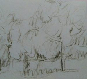 sketch of trees made with a pencil