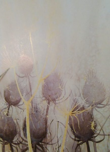 sketch of a thistle with watercolors and salt